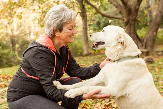 Do Companion Pets Benefit Seniors in calgary, CA